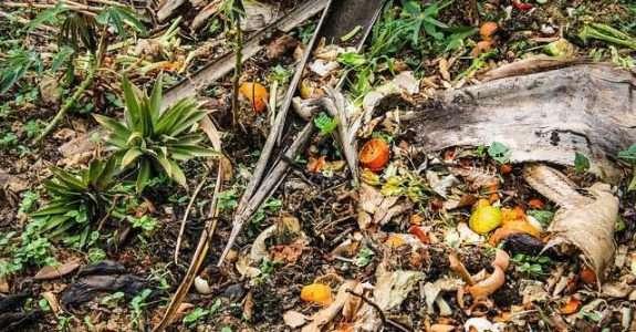 Compostagem de resíduos orgânicos