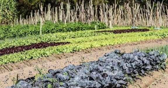Medidas econômicas para ajudar produtores rurais afetados pela pandemia.