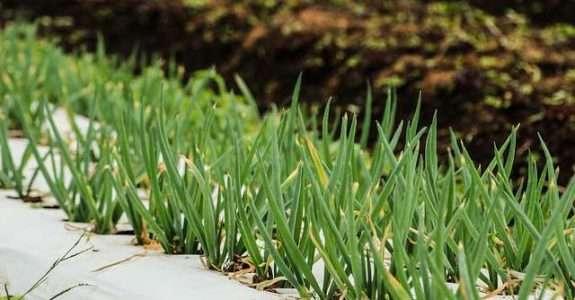 Artigo analisa o desempenho da agricultura orgânica
