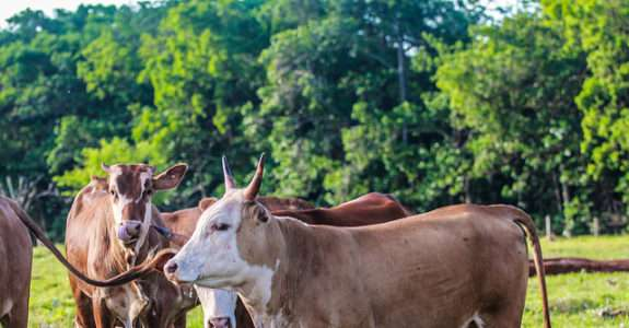 A nova era da Pecuária no Brasil