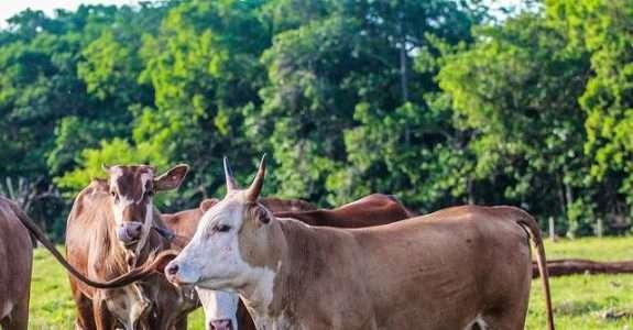 Ações da PF impulsionam venda de carnes especiais e orgânicas
