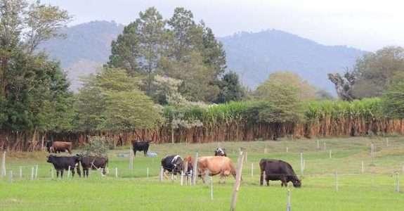 Fazenda Nata da Serra, Serra Negra, SP:  produção orgânica de leite