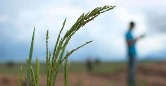 Sul-coreanos criam oásis de alimentos orgânicos na Bahia