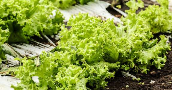 Mais de 80% dos produtores de orgânicos têm dificuldades e recorrem a ajuda técnica