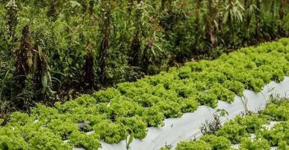Ministra de Agricultura quer que alimentos orgânicos cheguem à merenda escolar