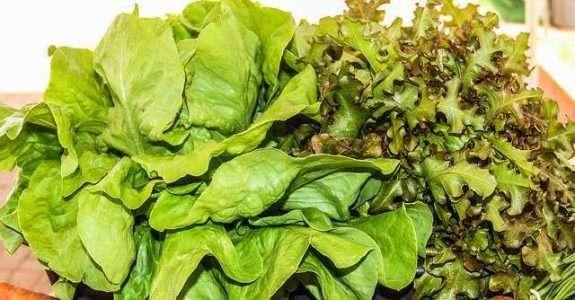 Brasil assina parceria com o Chile para comercialização de orgânicos