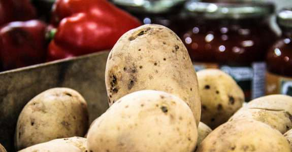 Nos EUA, batata geneticamente modificada passa a ser considerada de alto risco