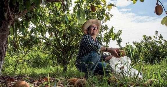 A nova economia da Amazônia