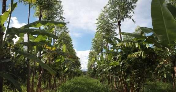Técnicas sustentáveis de plantio preservam o solo e aumentam rendimento da produção