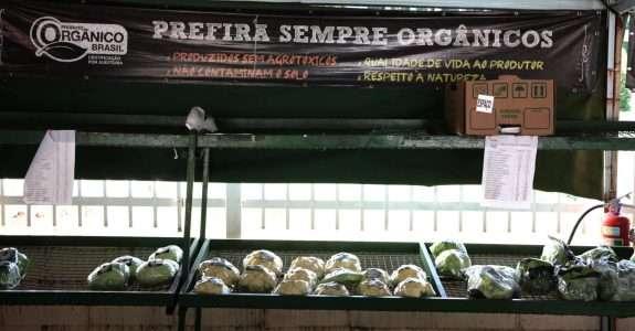 Campanha nacional informa população sobre melhores formas de identificar orgânicos em feiras e mercados