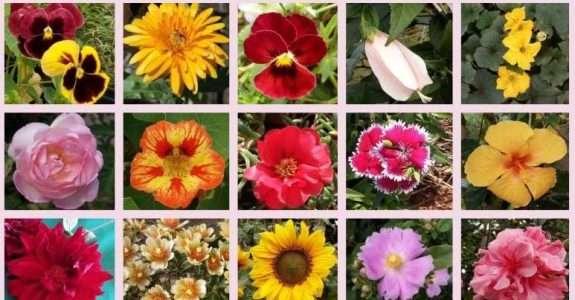 Aprenda mais sobre flores comestíveis e quais os benefícios