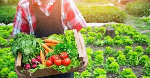 Caso de sucesso: Nutrir Orgânicos conecta produtores e clientes