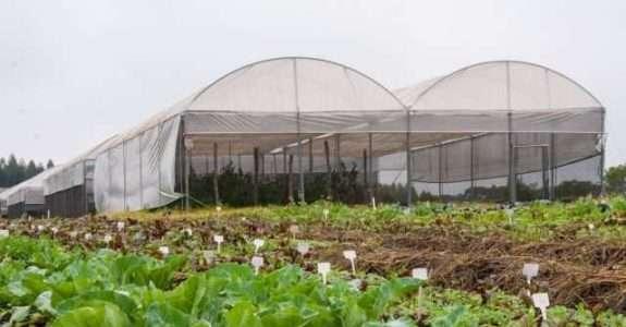 Biofertilizante orgânico feito à base de microalgas é alternativa sustentável