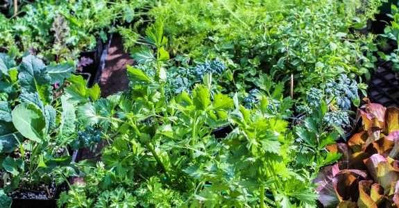 Agricultura Orgânica: Principais procedimentos para uma produção sustentável.